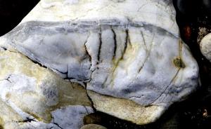 Rock Fish, Torrin